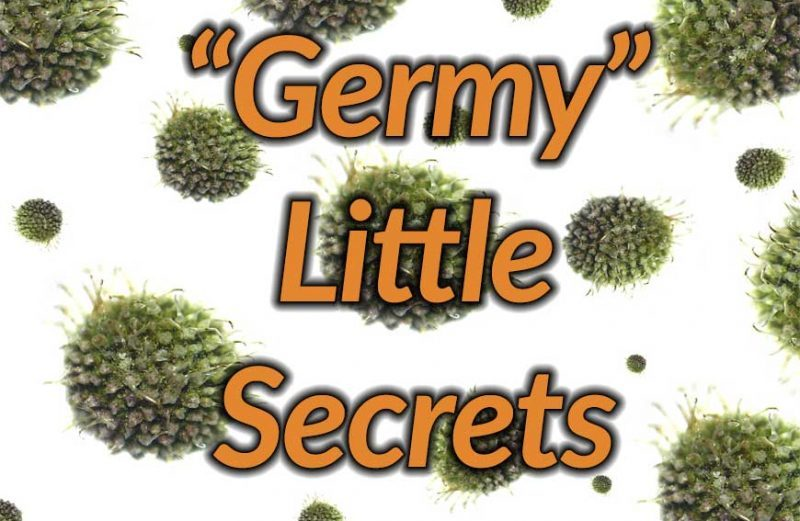 Germy Little Secrets Infographic